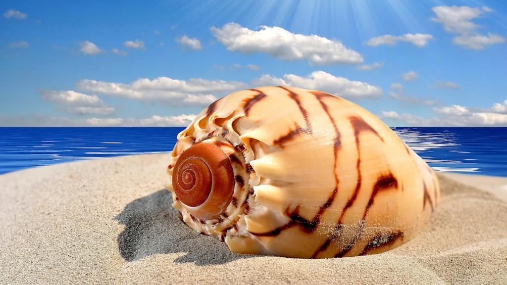 Ракушка морская
